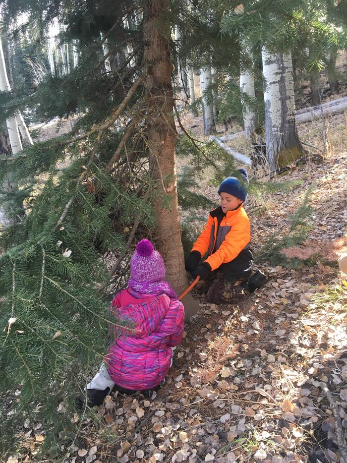 It's a Family TraditionKids cutting their own tree to take home.