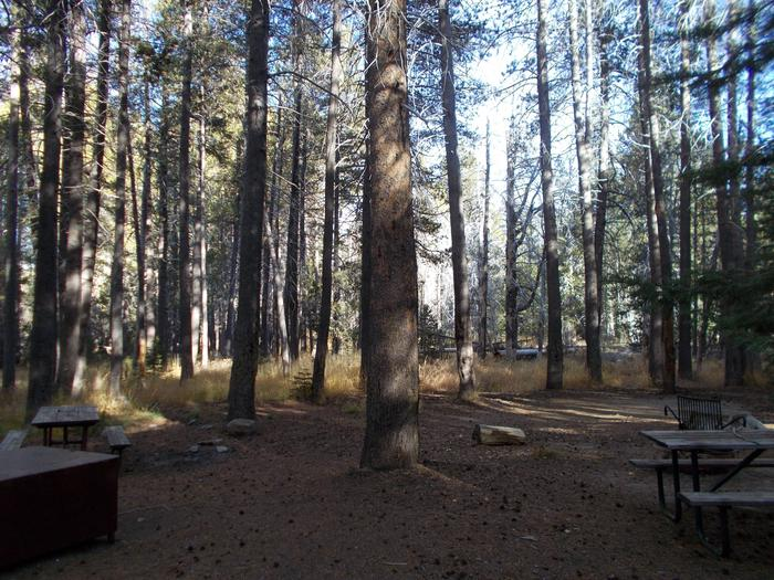 Food locker, picnic table, and fire ringSite 84