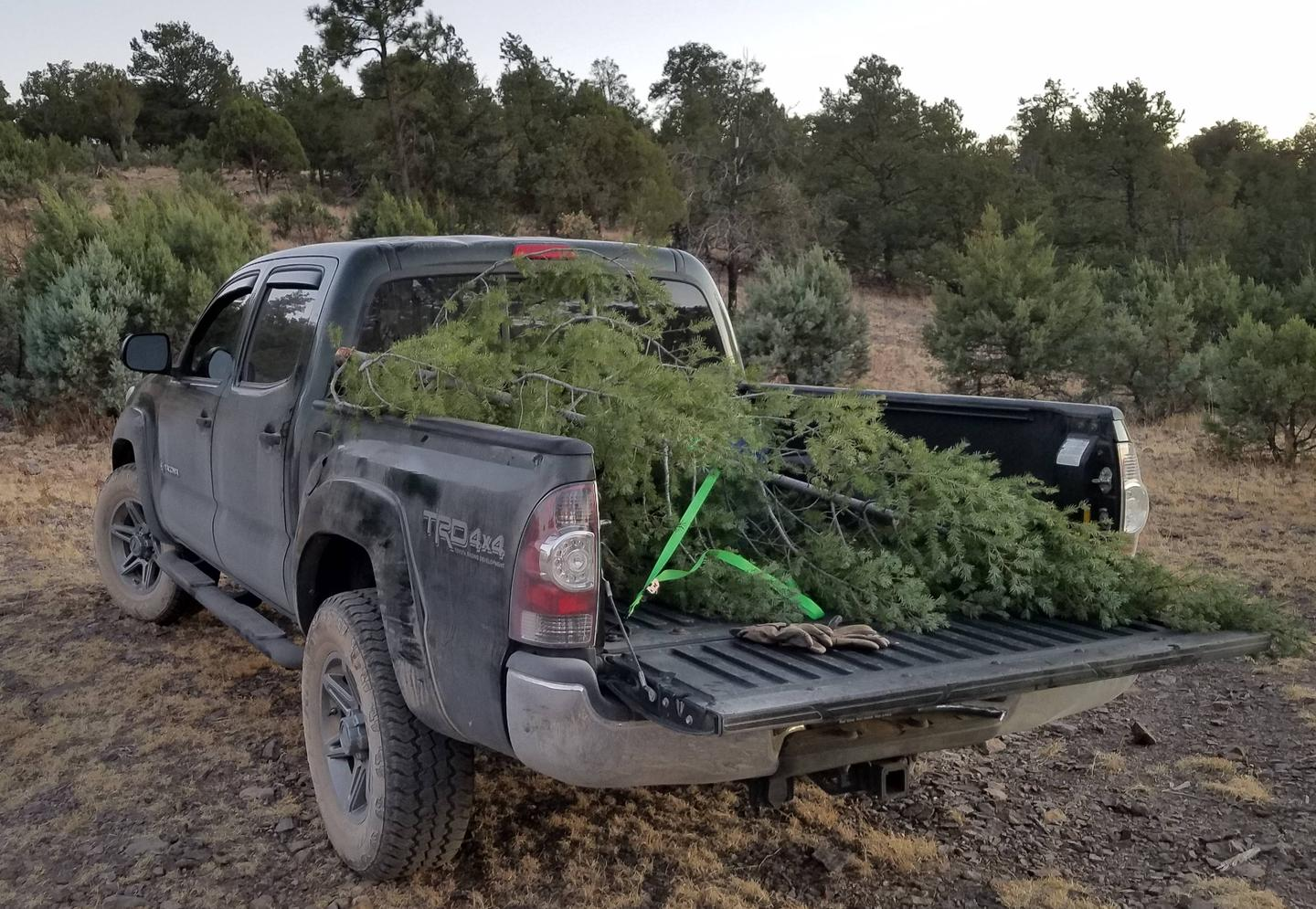 Christmas Tree in the back of a truckHarvested Christmas tree from the Black Range