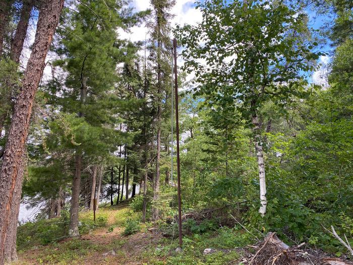 Bear Pole at Olso Lake backcountry campsite