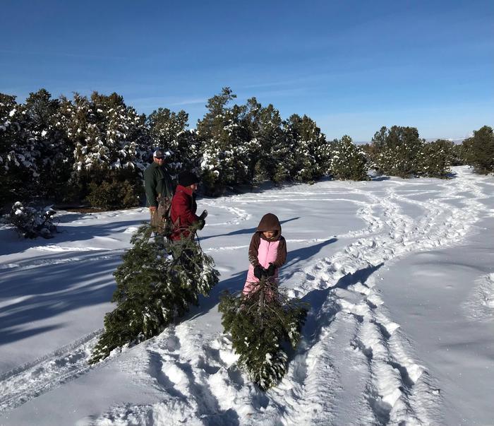 Tree hunting processProud Christmas Tree find