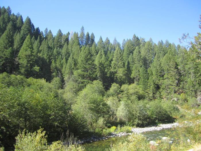 View of North YubaIndian Valley Campground