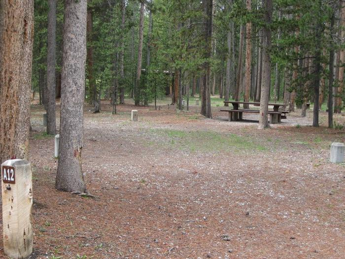 Site A12, surrounded by pine trees, picnic table & fire ringSite A12