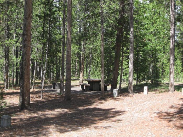 Site C5, surrounded by pine trees, picnic table & fire ringSite C5