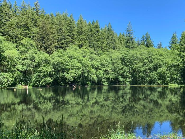 Preview photo of Hebo Lake Campground