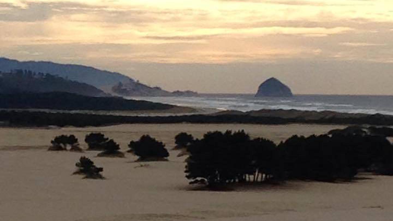 Wind swept trees on flat beach with fog bank over coastal hills in background.SANDBEACH