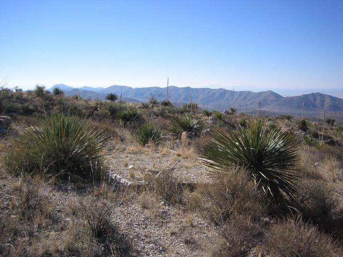 Shumard tent padThe Shumard tent sites are in desert vegetation.