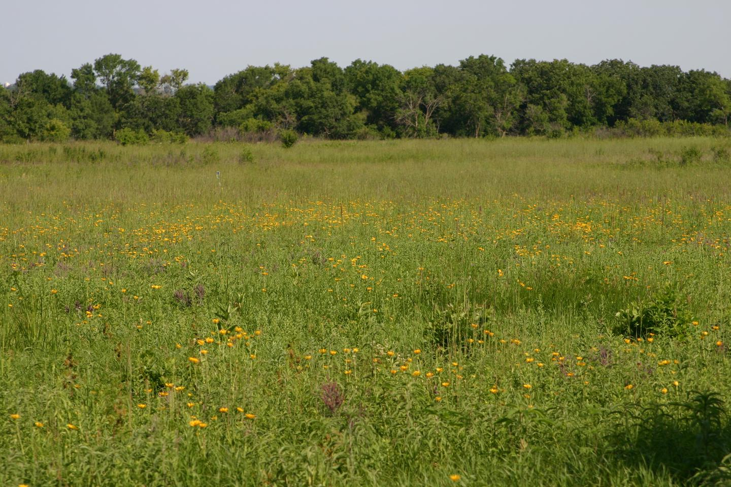 Interp_CircleTrail-PrairieFlowersGrass_7-2009View of Prairie Grasses and summer wildflowers, one of many scenic sites visitors can see from the Monument Circle Trail.