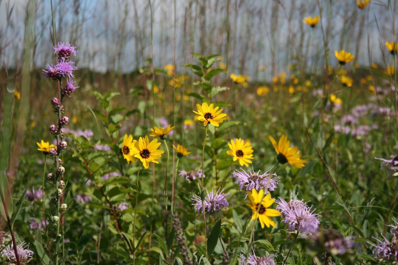 Tallgrass PrairieThe tallgrass prairie is an explosion of color spring through fall