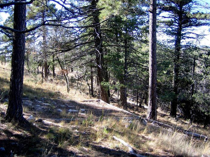 Blue Ridge campsite