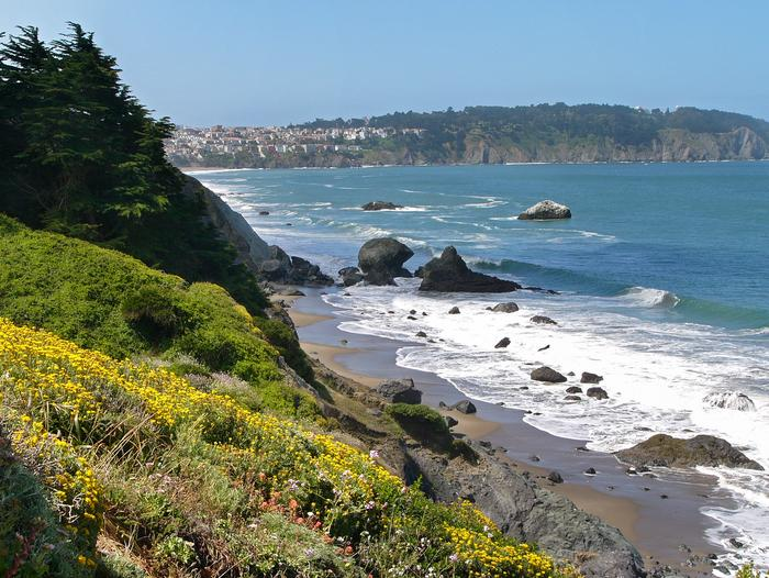 Coastal BluffsThe coastal bluffs of the Presidio still retain a wild feeling within the city.