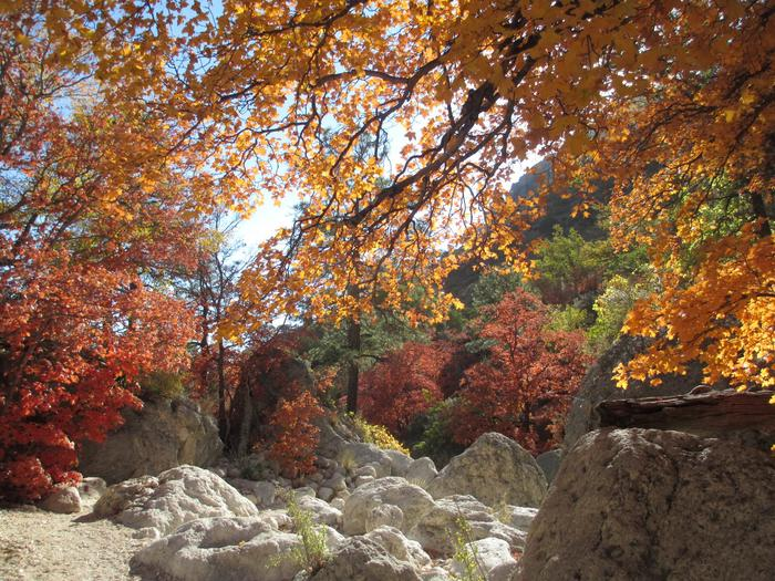 Devil's Hall Fall ColorsChanging maple trees line the Devil's Hall trail during the fall months.