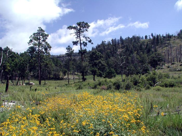 The Bowl wildflowersDuring the spring months, wildflowers are a common sight along The Bowl trail.