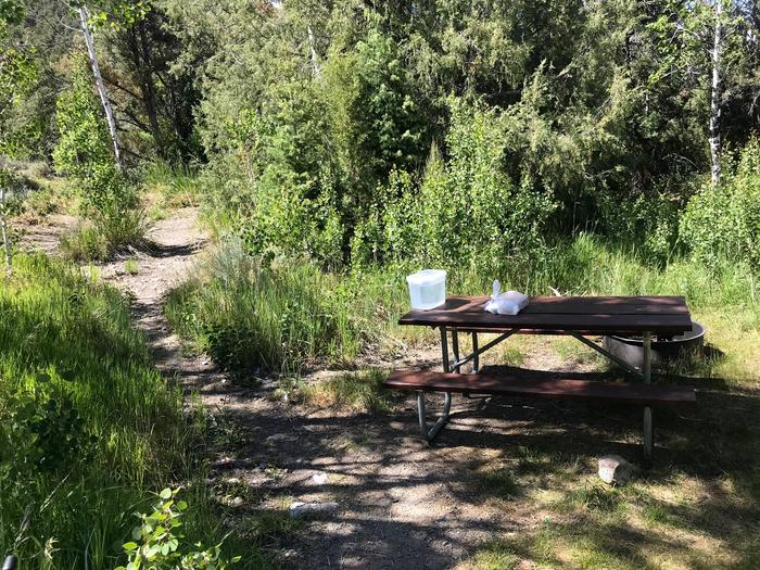 Picnic table in spotty shade surrounded by aspen treesLower Lehman Campground Site #3