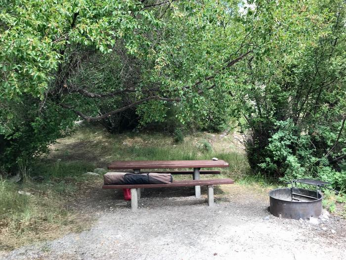 Picnic table and campfire ring shaded by treesLower Lehman Campground Site #9