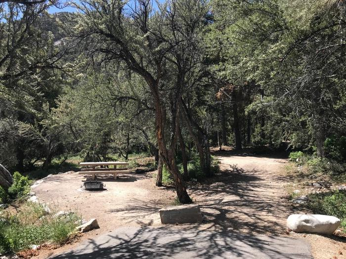 Picnic table, campfire ring and dirt tent pad shaded by mountain mahogany trees.Upper Lehman Campground Site #16