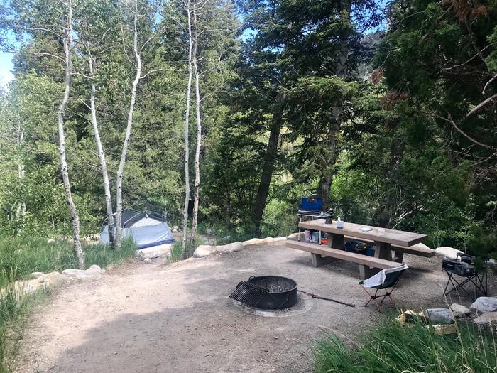 Picnic table, campfire ring and tent shaded by aspen treesUpper Lehman Campground Site #20