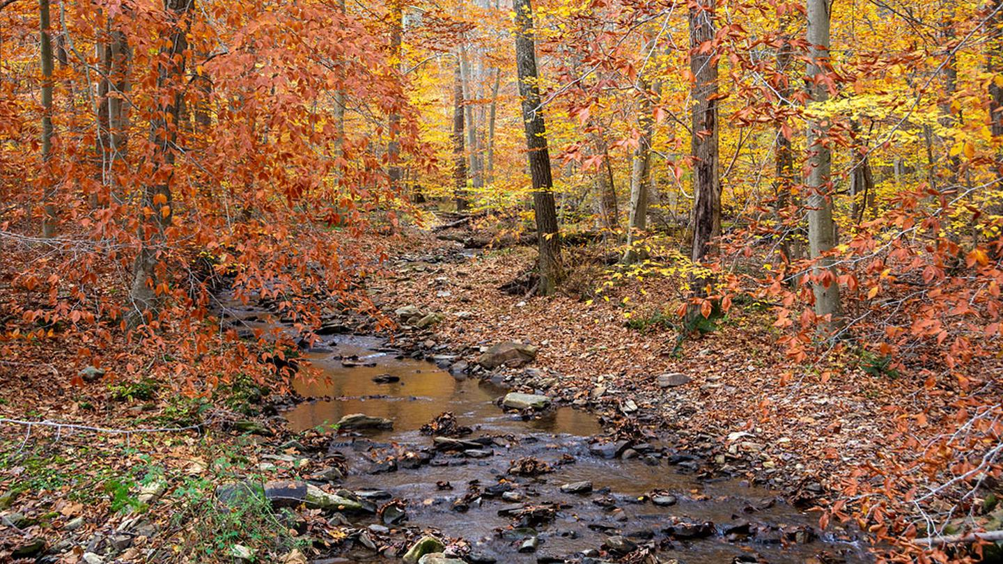 Small rocky creek lined with trees in orange and gold foliage.Enjoy the soothing sound of Owens Creek and abundant wildlife from you campsite in Owens Creek.