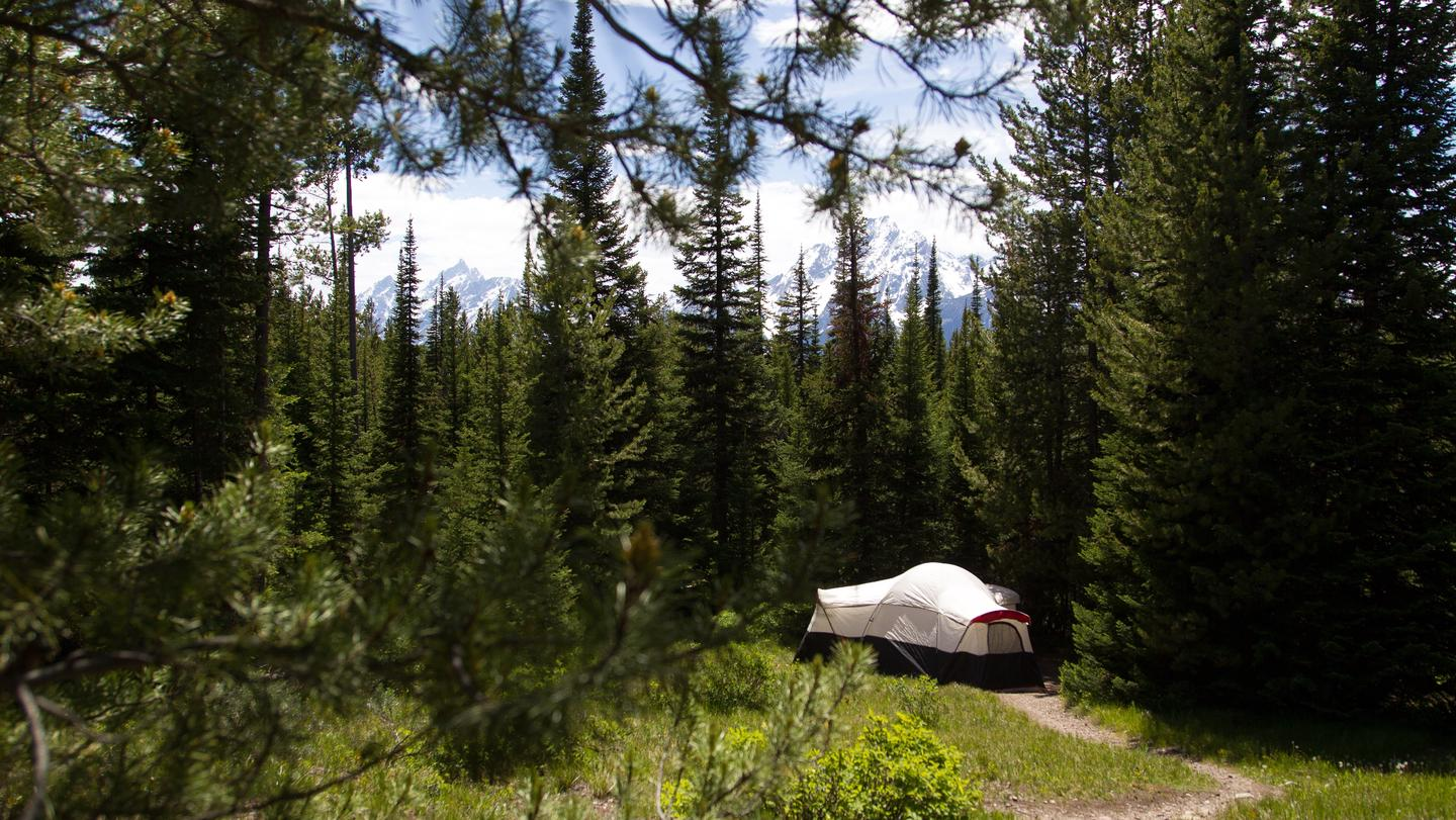 Colter Bay Campground Tent SiteThe Colter Bay Campground is situated in a lodgepole pine forest within walking distance of Jackson Lake and numerous trails.