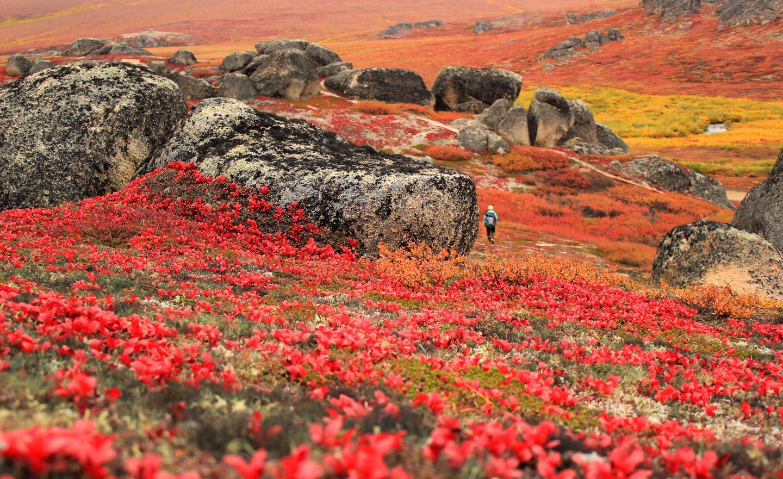 Fall ColorsAutumn hike at Bering Land Bridge