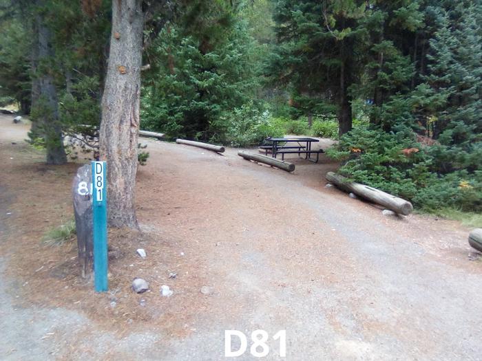 D Loop Site 81