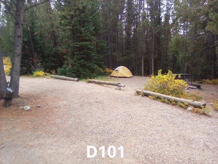 D Loop Site 101