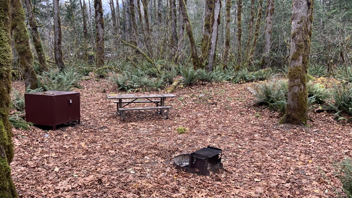 Picnic table, bear box, and fire grate with trees in the background. Campsite in Goodell Creek Campground