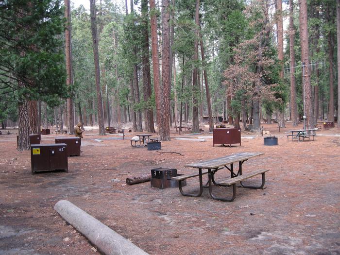 CampsiteCampsite 82