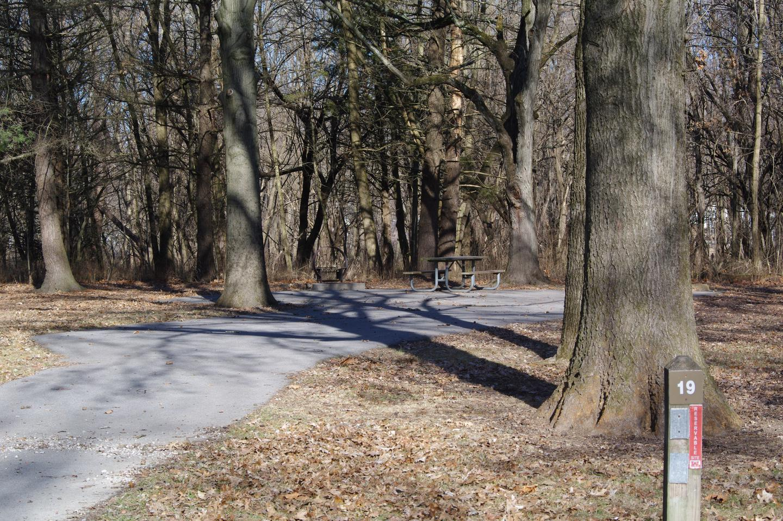 Site 19