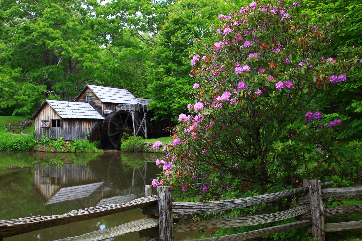 Mabry MillLocated in Virginia's Plateau district, picturesque Mabry Mill is one of the most iconic features of the Blue Ridge Parkway