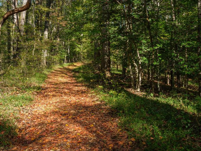 Nature Trail System