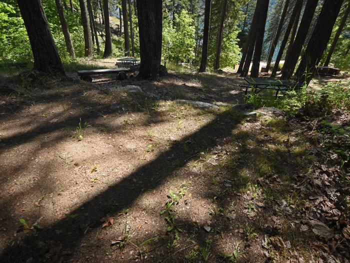 A campsite surrounded by open forest with a picnic table at the edgeLakeview SIte 5