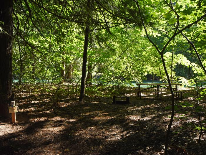 A picnic table in a campsite surrounded by open forest with river behindHarlequin Site 5