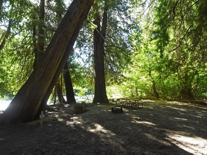 A picnic table in a campsite surrounded by open forest next to a riverHarlequin Site 7
