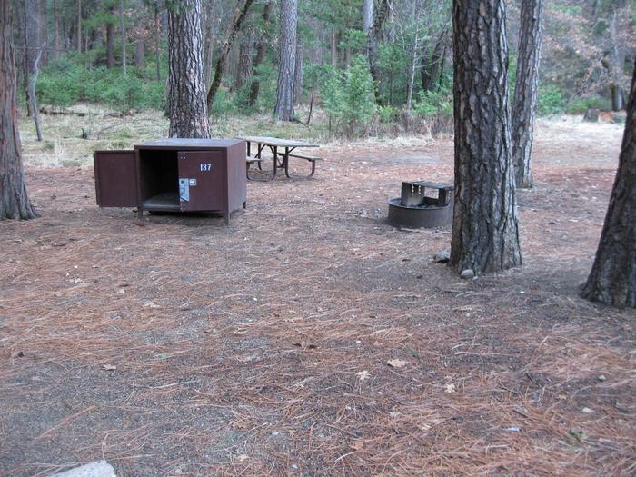 CampsiteCampsite 137