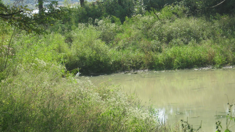 Opossum Creek