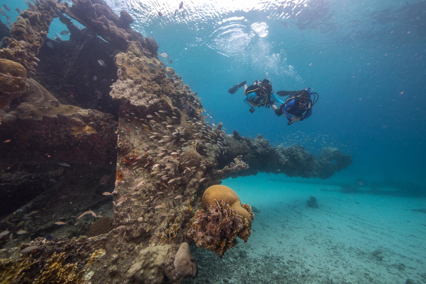 Diving at the Dry TortugasThe Dry Tortugas has over 300 sunken ships. One of the most accessible is the Winjammer Wreck which can be dove or snorkeled.