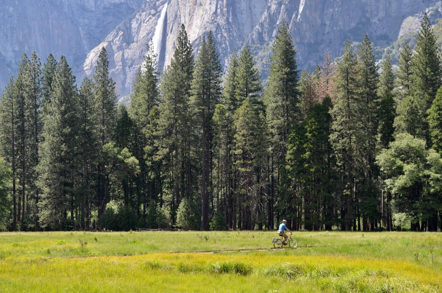 Bicyclist rides along established bike path in Yosemite Valley.