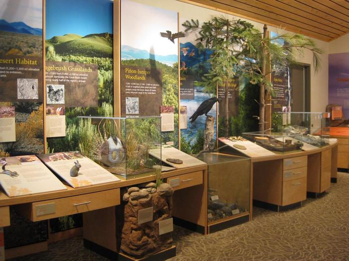 Life Zones exhibit Great Basin Visitor CenterAs you gain elevation in the Great Basin habitats start to change.