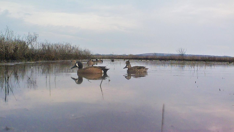 Ducks floating on the lake at duskDuck float on Elk City Lake