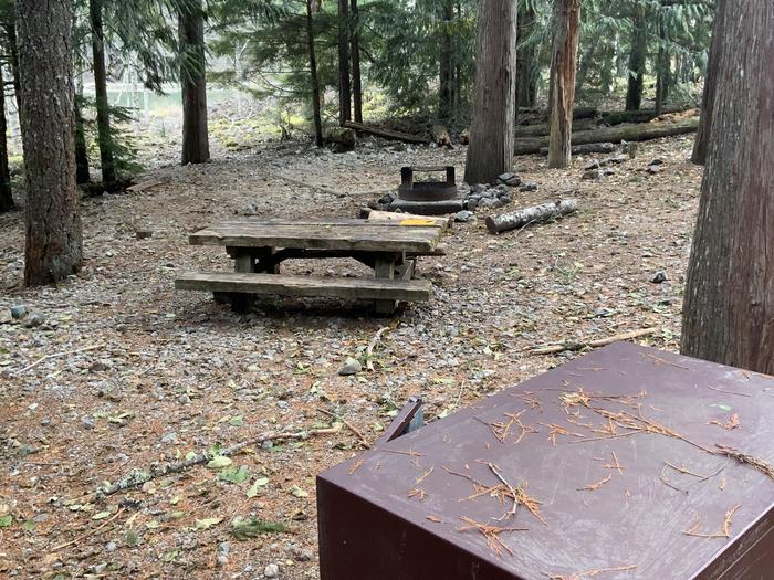 Bear box, picnic table, campfire ring, tent bad, and lakeshore sheltered under trees.Colonial Creek North campsite number 1. A walk-in site near the shore of Diablo Lake.
