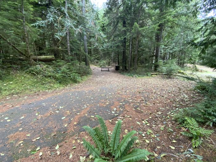 Paved driveway leads to a campsite that contains a picnic table, bear box, and campfire ring.View of campsite.