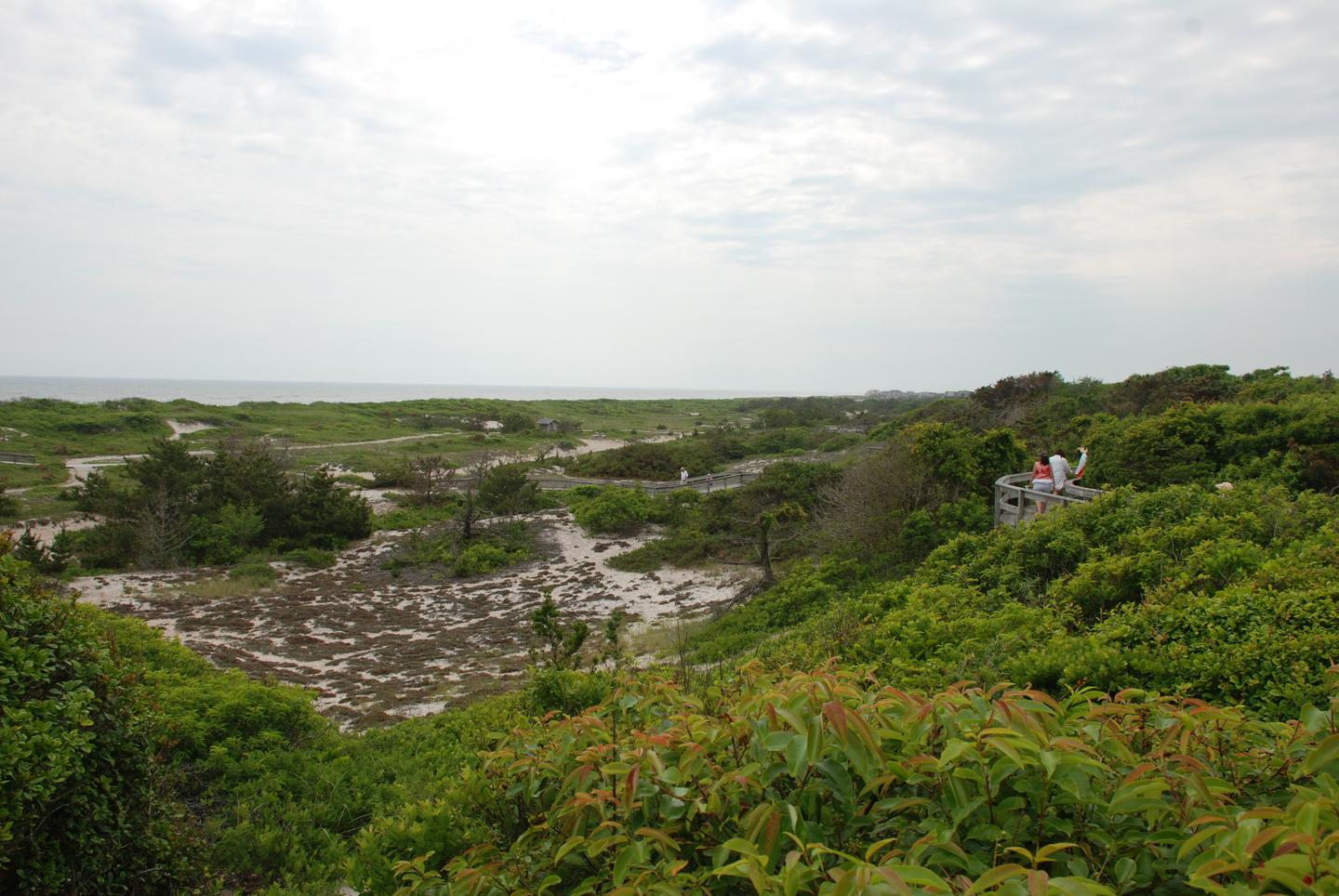 View of primary dune from Sunken Forest overlookGet one of the best boardwalk views on a walk through the Sunken Forest - a more than 350 year-old, globally rare ecosystem.
