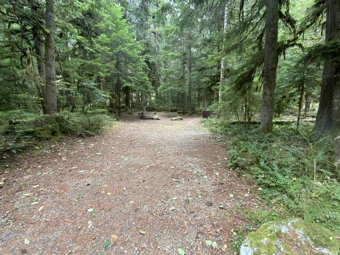 Gravel parking area next to a wooded campsite that contains a picnic table, bear box, and campfire ring.View of campsite.