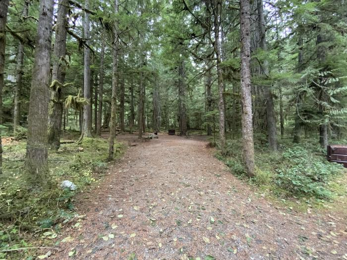 Long gravel driveway leading to a wooded campsite containing a campfire ring, picnic table, and bear box.View of campsite.