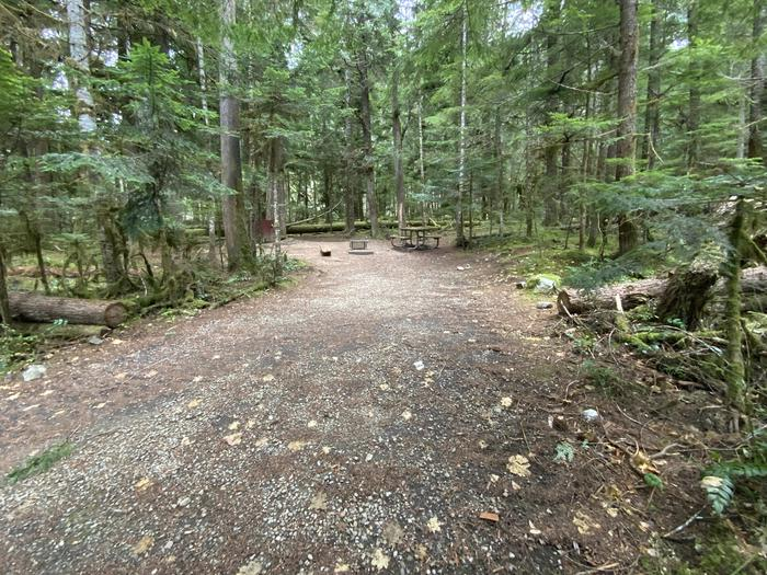 Gravel parking area adjacent to a wooded campsite containing a bear box, campfire ring, and picnic table.View of campsite.