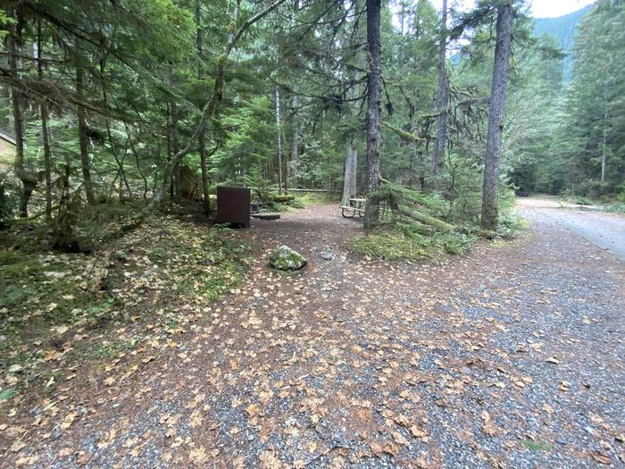 Wooded campsite containing a bear box, picnic table, and campfire ring.View of campsite.