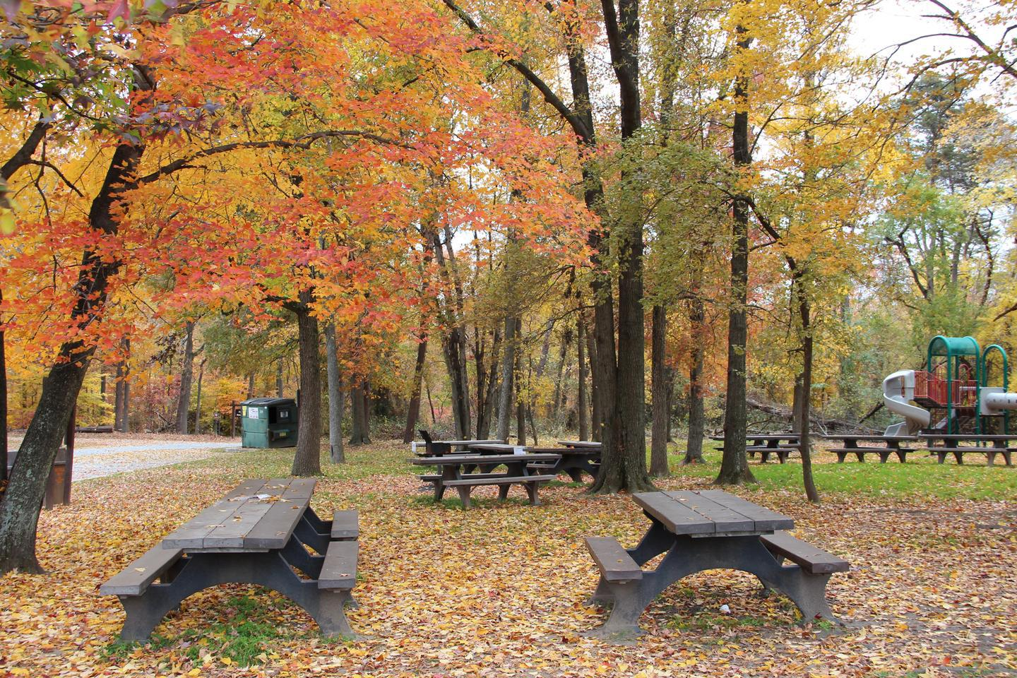 Fall Colors in the Sweetgum Picnic Area, Greenbelt Park, Maryland