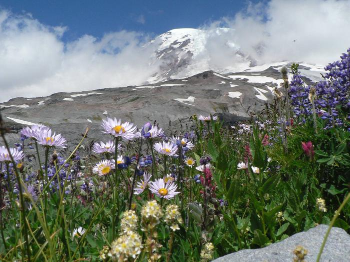 Preview photo of Mount Rainier National Park Wilderness and Climbing Permits
