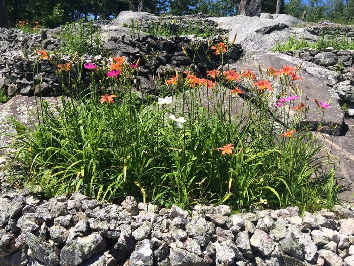 Small flower bed with day lilies and cosmos.